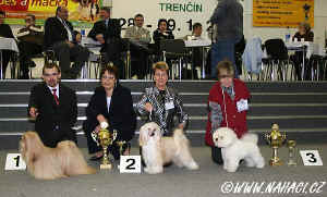 BIG IX. FCI - 1. lhasa apso, 2. chinese crested powderpuff, 3. bichon frise