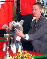 You´re my Man of Honeycroft - i na druhé výstavě získal titul reserve Puppy Best in Show.